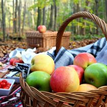 fallpicnicapplebasketcraftberrybush